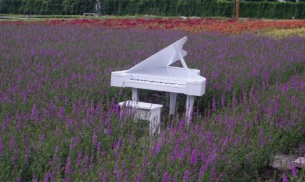 белый рояль в поле с лавандой
