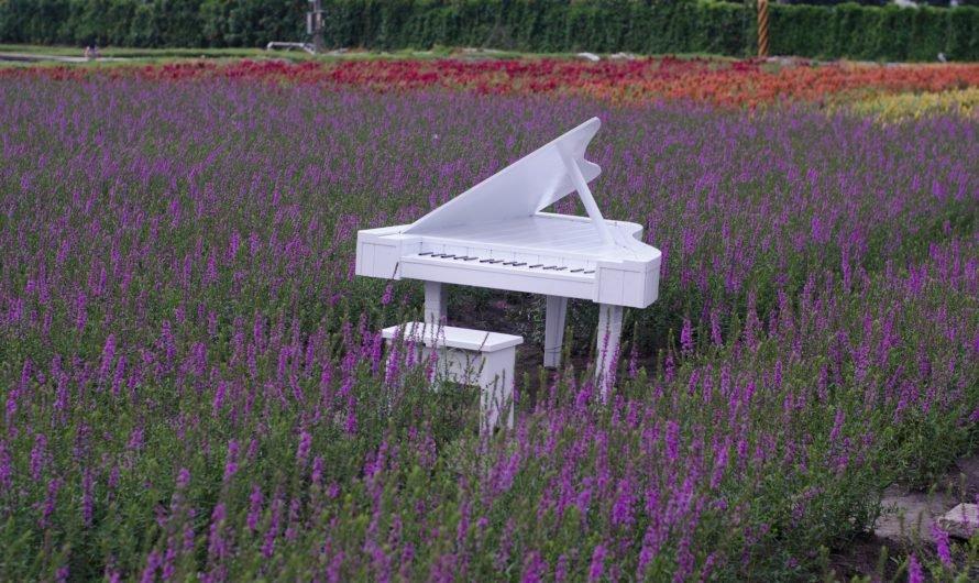 Откуда взялся рояль в кустах