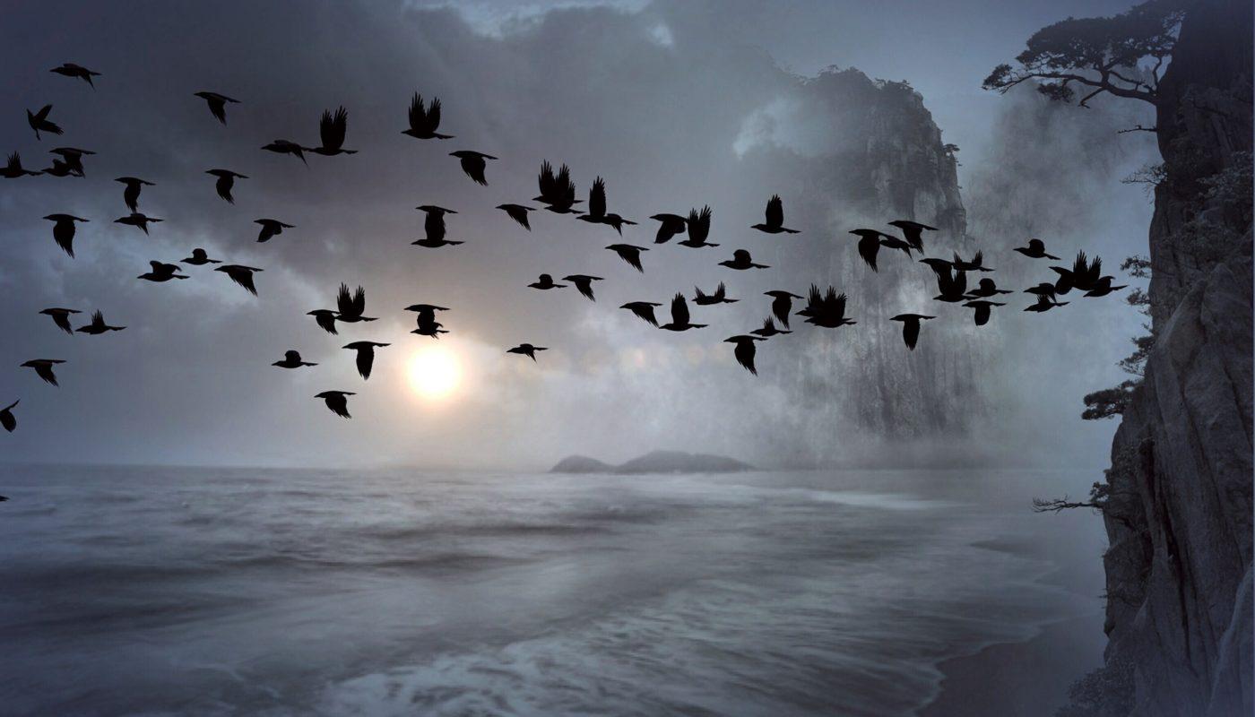 жуткие птицы над морем