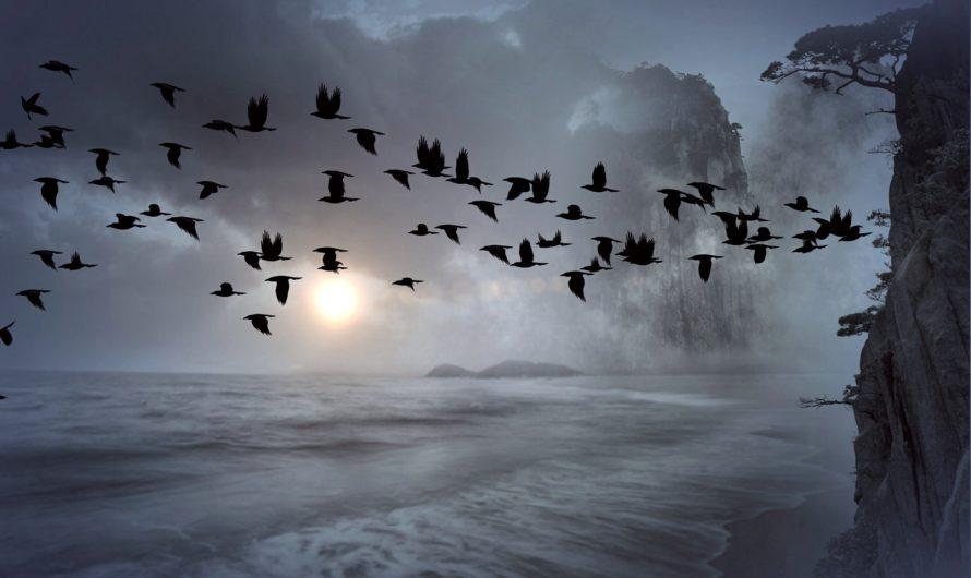 Необычные жуткие птицы в литературе ужасов